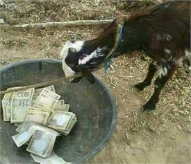 Pics: बकरी के चारे से लेकर टॉयलेट पेपर तक, सोशल मीडिया की Funny Photos वायरल