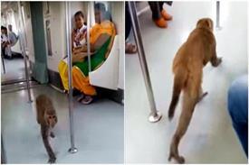 बिना टिकट के दिल्ली मैट्रो में सफर करता दिखा बंदर, सोशल साइट पर तस्वीरें हो रही हैं वायरल
