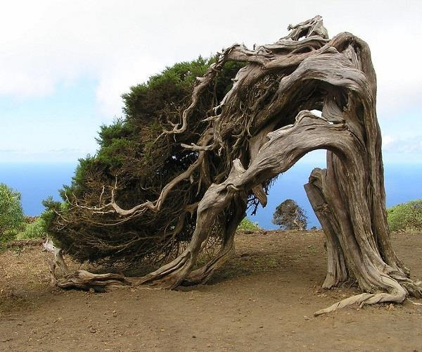 top 5 most strange and unique trees in the world