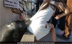 जब SEAL लड़की को खींच ले गई पानी में, Video में देखें फिर क्या हुआ?