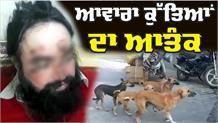 Stray Dogs ਦੀ ਦਹਿਸ਼ਤ, ਨੋਚ-ਨੋਚ ਕੇ ਖਾਧਾ ਵਿਅਕਤੀ