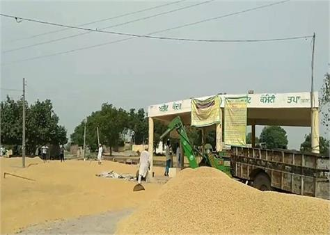 barnala  paddy bad purchase management protest