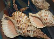 uk sea snails