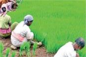due to the increase in msp  the farmers of haryana will benefit