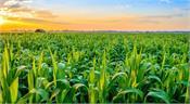 agricultural production online marketing start