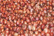 after two days  foreign onions will be rolled out of markets  cheaper