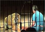 during the circus lions attacked the ring  pictures