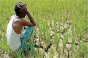 alternative farming  marketing  farmers  fair prices  upset