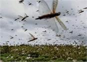 delhi government locust attack advisory forest department