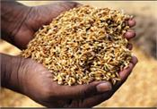 another control in ludhiana seed scam