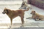 behrampur  stray dogs  disturbed people