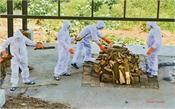 corona dead  cremation  health department