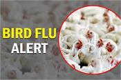 outbreak of another epidemic in india is it just bird flu