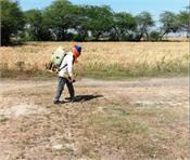 wheat grain markets sanitizers masks essentials