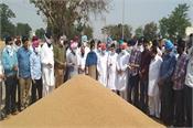 samrala grain market