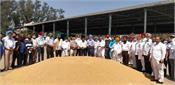 dana mandi tanda wheat government procurement