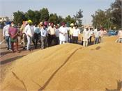 punjab government will buy one grain at a time for farmers  randhawa