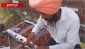 strawberry  agriculture  income  gurdaspur  farmer  shere punjab singh