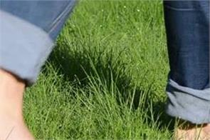 morning green grass barefoot walking