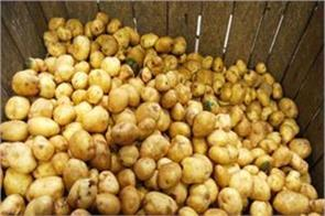 potato prices up by 20  due to unnecessary purchase