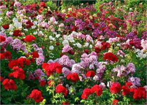 chandigarh open horticulture museum