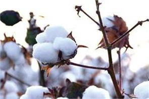 supreme court agriculture laws cotton procurement