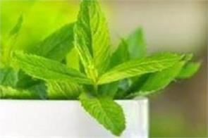 these benefits are with mint eating