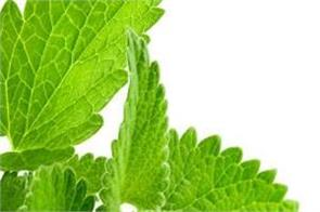 mint is very useful for the body