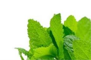 not only the taste of mint  health is also extremely beneficial
