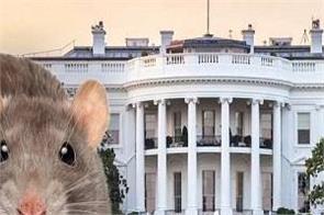 america  the white house