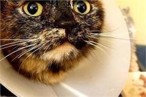 9 month cat rape