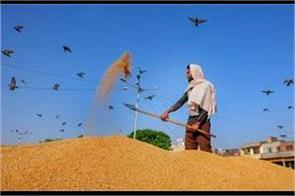 unusual purchase of paddy on the first day in punjab