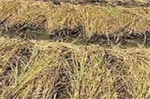 sherpur parali farmers compensation government rules change