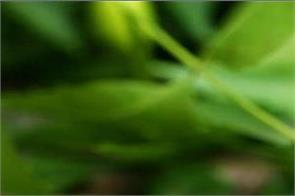 benefits neem oil