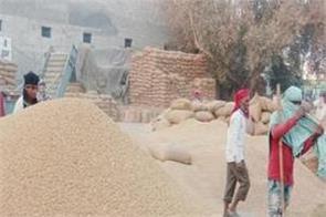 paddy  farmer  market