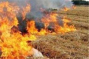 punjab one day straw fire cases records