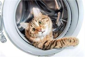 malaysia hands jail term to laundrette cat killer