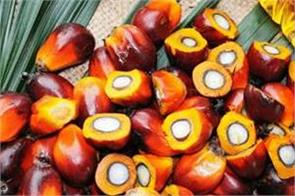 demand for palm oil production