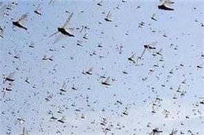 pakistan border coronavirus india locusts central government