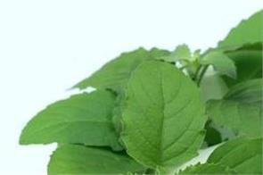 tulsi benefits seasonal fever