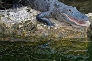 filipino father biting on the leg of crocodile and rescued his son