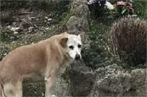italy  loyal dog