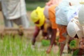 punjab all set to start paddy sowing