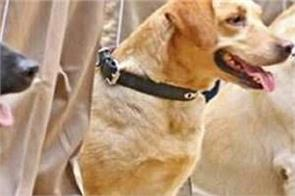 investigators dogs in kishtwar to trace militants