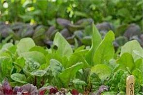 kapurthala prakash purbo sant seechewal plants