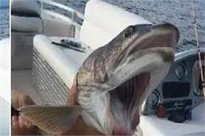 america  two mouthed fish