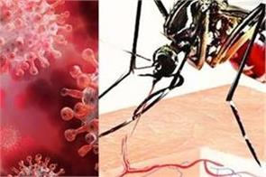 corona relief dengue outbreak heavy  more than a thousand cases