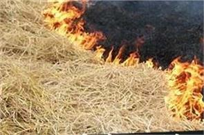 paddy straw burning farmers record