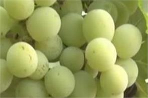 eating grapes provides relief from these diseases