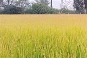 straw fields conservation farmers sukhpal example